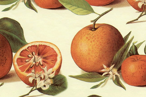 Carta Frutta Arance 50x70cm (cod. 1132)