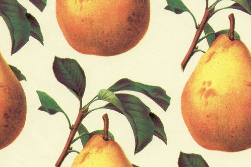 Carta Frutta Pera Gialla 50x70cm (cod.1090)