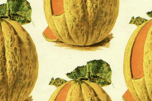 Carta Frutta Melone 50x70cm (cod.1500)