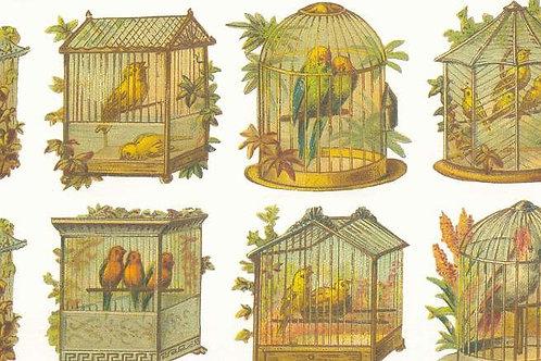 Carta con Uccelli 50x70cm (cod. 6356)
