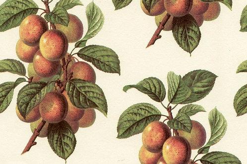 Carta Frutta Arancione con Foglie Verdi 50x70cm (cod. 1091)