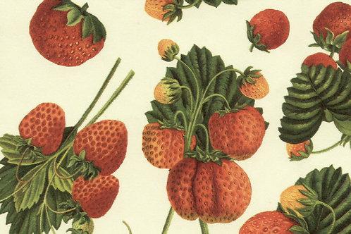 Carta Frutta Fragole 50x70cm (cod.1495)