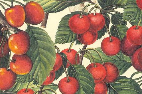 Carta Frutta Rossa con Foglie 50x70cm (cod.6361)