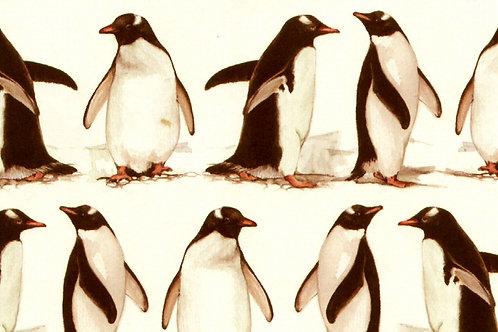 Carta con Pinguini 50x70cm (cod. 0273A)