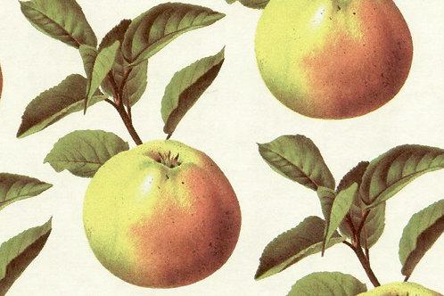 Carta Frutta Gialla con Foglie Verdi 50x70cm (cod. 1175)