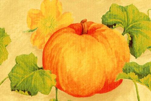 Carta Frutta Zucca 50x70cm (cod.1596)