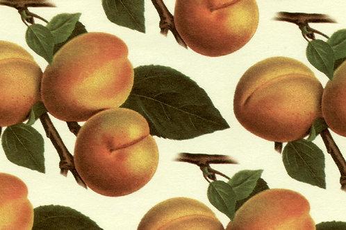 Carta Frutta Albicocca 50x70cm (cod.1435)