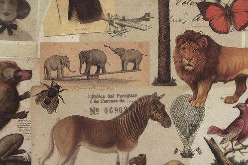 Carta con Animali Vari 50x70cm (cod. 2079)