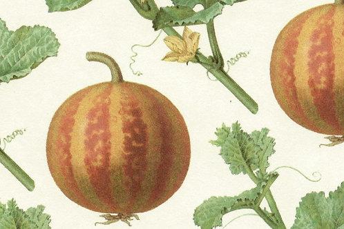 Carta Frutta Anguria 50x70cm (cod.1177)