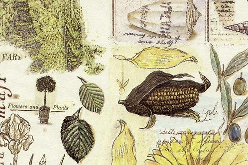 Carta con Campagna 50x70cm (cod. 1451)