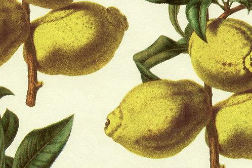 Carta Frutta Limoni 50x70cm (cod. 1173)