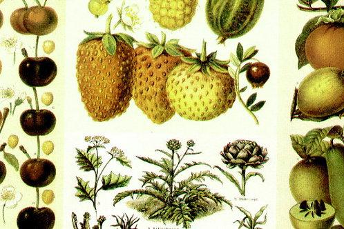 Carta Frutta Verde e Gialla 50x70cm (cod.5384)