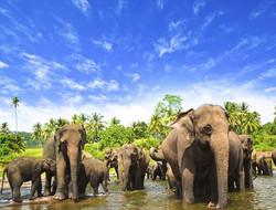Elephants-au-Sri-Lanka-4197