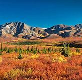 parc-national-et-reserve-de-denali-alask