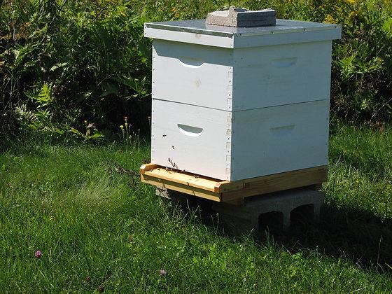 Adoptez une ruche