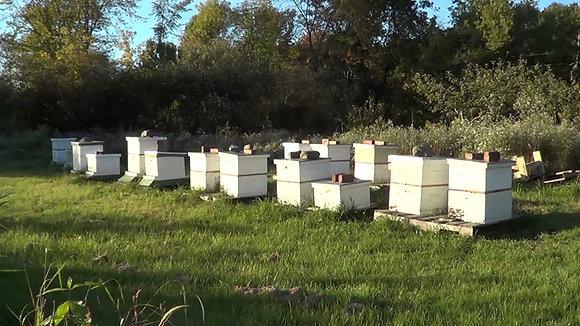 Adoptez un rucher