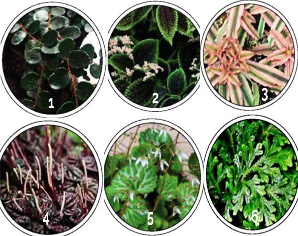 Great plants for terrarium