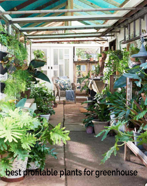 Best Plants To Grow In A Greenhouse
