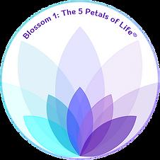 Blossom 1 The Petals of Life