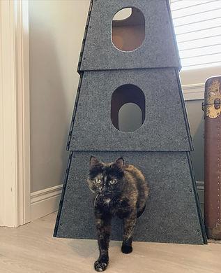foster kitty.jpg