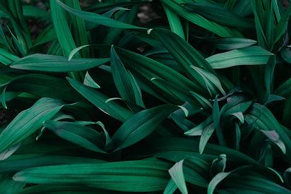 greenery1.jpg