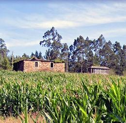 Genealogía de las familias Piñón do Seixidal (Valdoviño), y Piñón de Vilariño (Abade, Moeche)