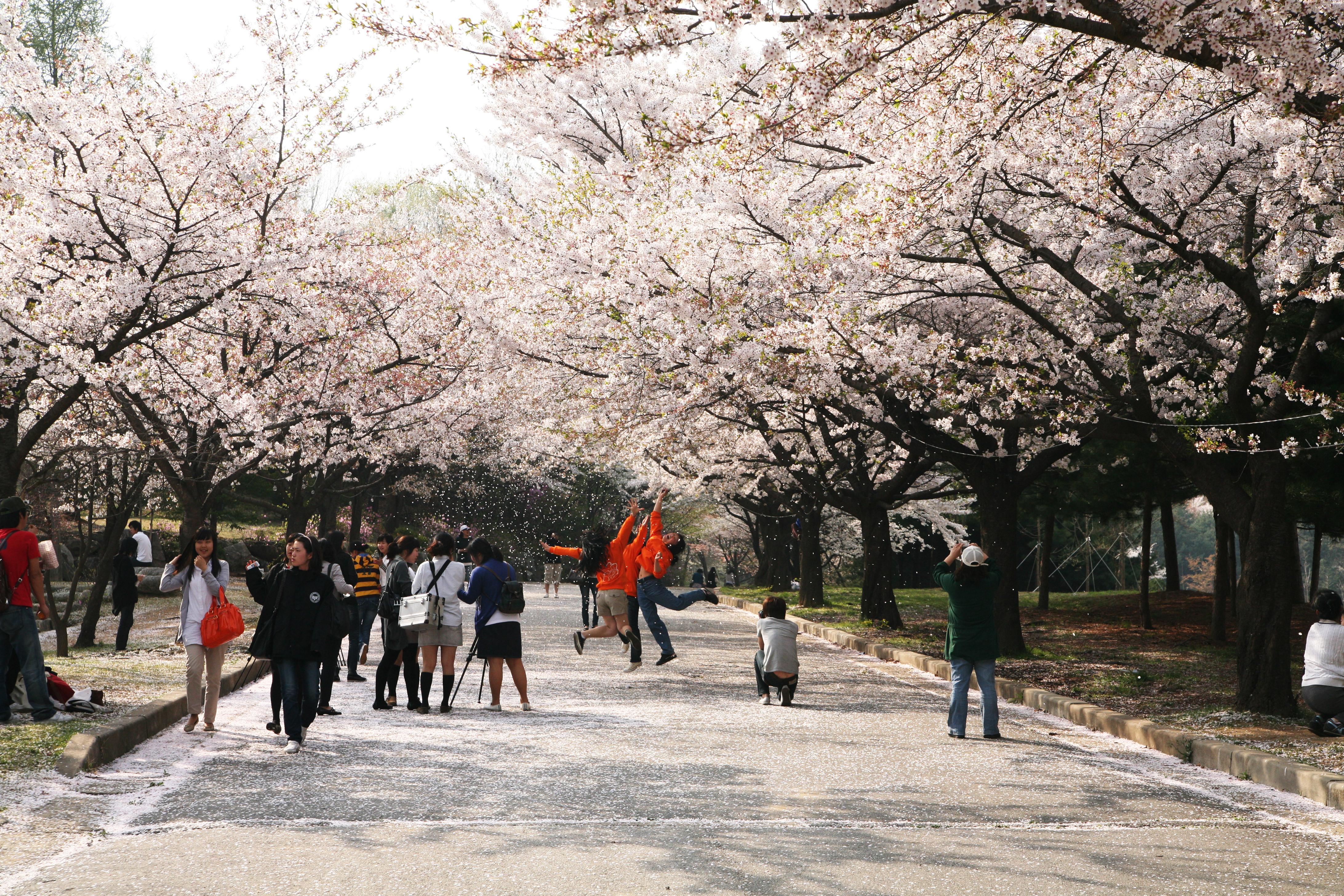 벚꽃 길.JPG