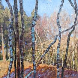 Silver Birch grove, late afternoon, 29x30cm, oil on board, £380-400.jpg