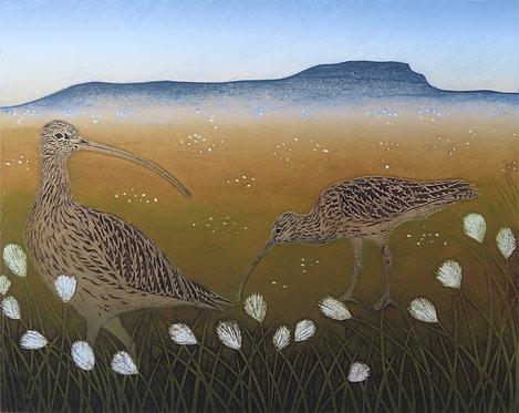 Curlews & Cotton Grass