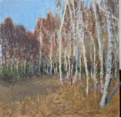Silver Birch grove, early morning, 24x30cm, oil on board, £350