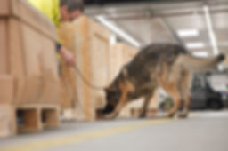 sniffing dog, ARI shipping corporation, shipping corporation, heavy machinery shipping, warehousing, fulfillment, harzardos cargo, refridgerated cargo, oversized cargo, cargo, materia handling, shipping, boat transport