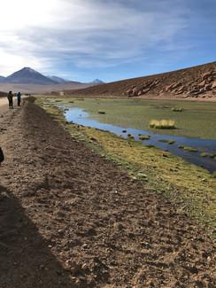 Oasis of the Atacama