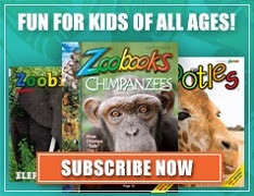 Zoobooks - Read to your Children..... Help your Child to Read