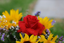 Flores-De-Colores (29).JPG