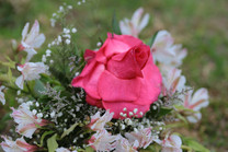 Flores-De-Colores (18).JPG