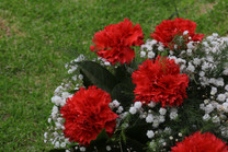 Flores-De-Colores (34).JPG