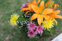 Flores-De-Colores (9).JPG