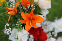 Flores-De-Colores (30).JPG
