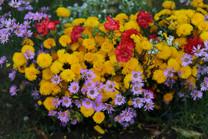 Flores-De-Colores (13).JPG