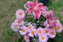 Flores-De-Colores (4).JPG