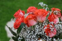 Flores-De-Colores (28).JPG