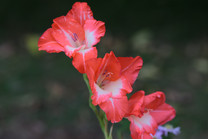 Flores-De-Colores (11).JPG