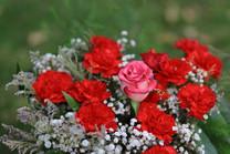 Flores-De-Colores (15).JPG