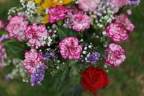 Flores-De-Colores (32).JPG