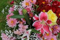 Flores-De-Colores (40).JPG