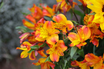 Flores-De-Colores (25).JPG