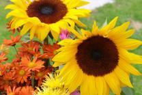 Flores-De-Colores (35).JPG