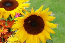 Flores-De-Colores (36).JPG