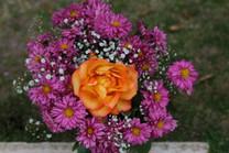 Flores-De-Colores (6).JPG