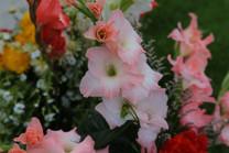 Flores-De-Colores (21).JPG